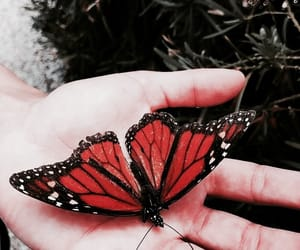 butterfly, orange, and red image