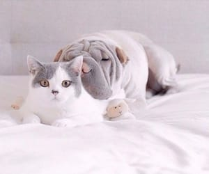 cats, inspiration, and dogs image