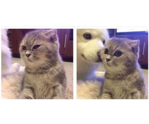 angry, animal, and cat image