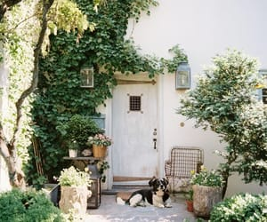 dog, plants, and house image