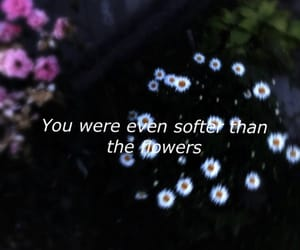 flowers, quote, and roses image
