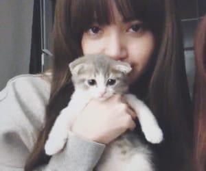 lisa, blackpink, and cat image