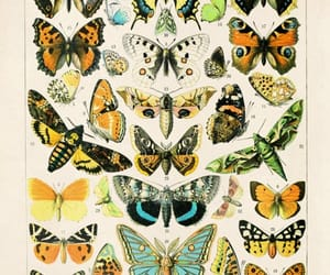 amazing, drawing, and papillon image