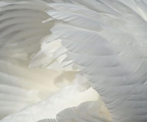 wings, angel, and feather image