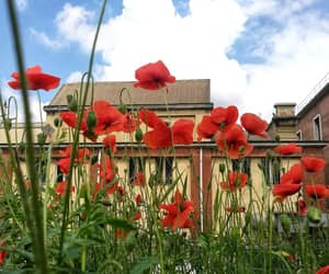 beautiful, poppies, and behappy image