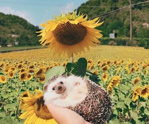 animal and sunflowers image