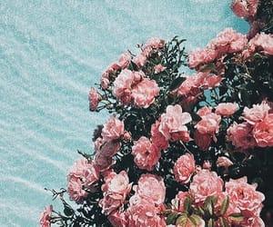 beach, flowers, and la image