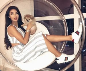 dog, gucci, and beauty image