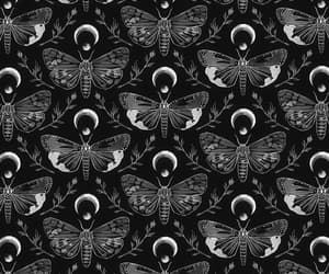 moth, wallpaper, and background image