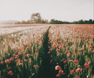 beautiful, field, and red image