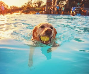 dogs, swimming, and cute image