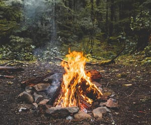fire, nature, and tree image