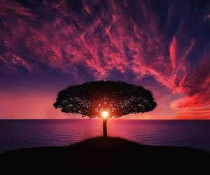 tree, sunset, and nature image
