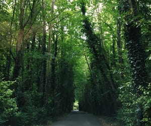 ireland, road, and trees image