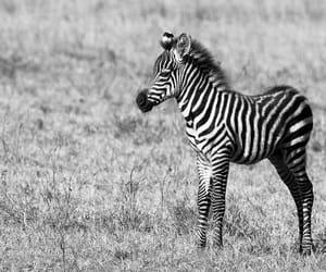 animals, nature, and wildlife image