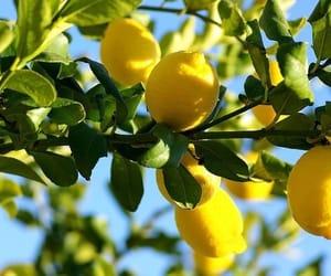 lemon, nature, and pretty image
