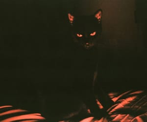 cat, black, and dark image