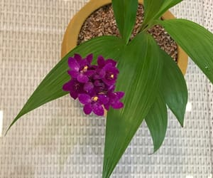 beleza and orchid image