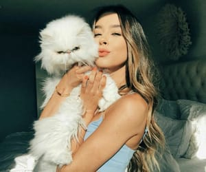 cat, fashion, and hair image