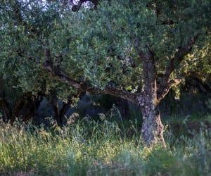 Greece, zakynthos, and olive tree image