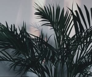 plants, aesthetic, and alternative image