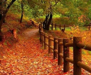 autumn and path image
