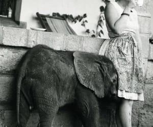 elephant, baby, and photography image