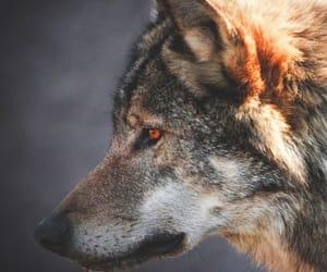 dog and wildanimal image