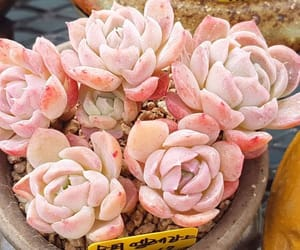 pink, plants, and pretty image