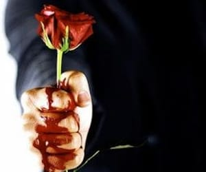 blood, rose, and love image