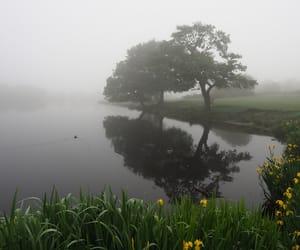 alternative, fog, and landscape image
