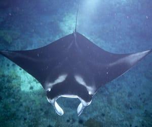 beautiful, big, and oceanlife image