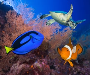 blue, marine, and marlin image