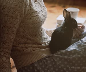 pet and rabbit image