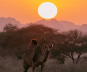 africa, desert, and Sahara image