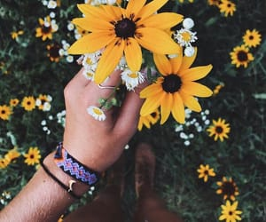 amarelo, flores, and yellow image