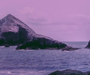 nature, photography, and purple image