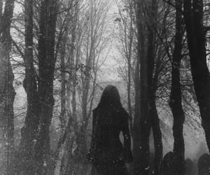 dark, black and white, and forest image