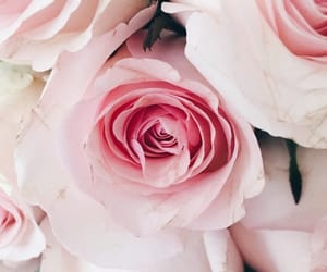 aesthetic, flowers, and girly image