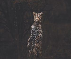 animal, vintage, and eyes image