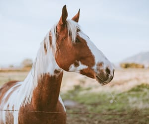 Animales, caballos, and horse image