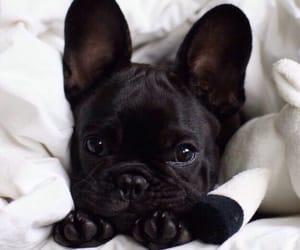 black, dog, and tumblr image