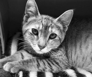 black & white, black and white, and cat image