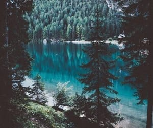 nature, forest, and blue image