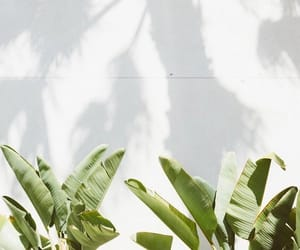 white, plants, and nature image