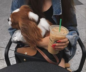 dog, girl, and starbucks image