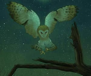 owl and stars image