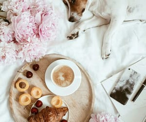 coffee, croissant, and dog image