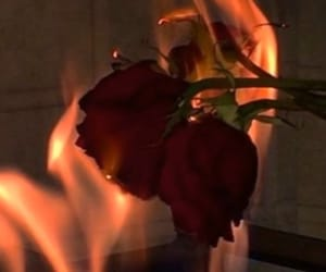 rose fire image
