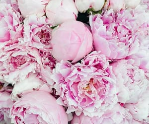 flowers, pink, and influencer image